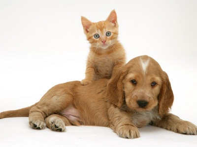 Puppy & Kitten Photo