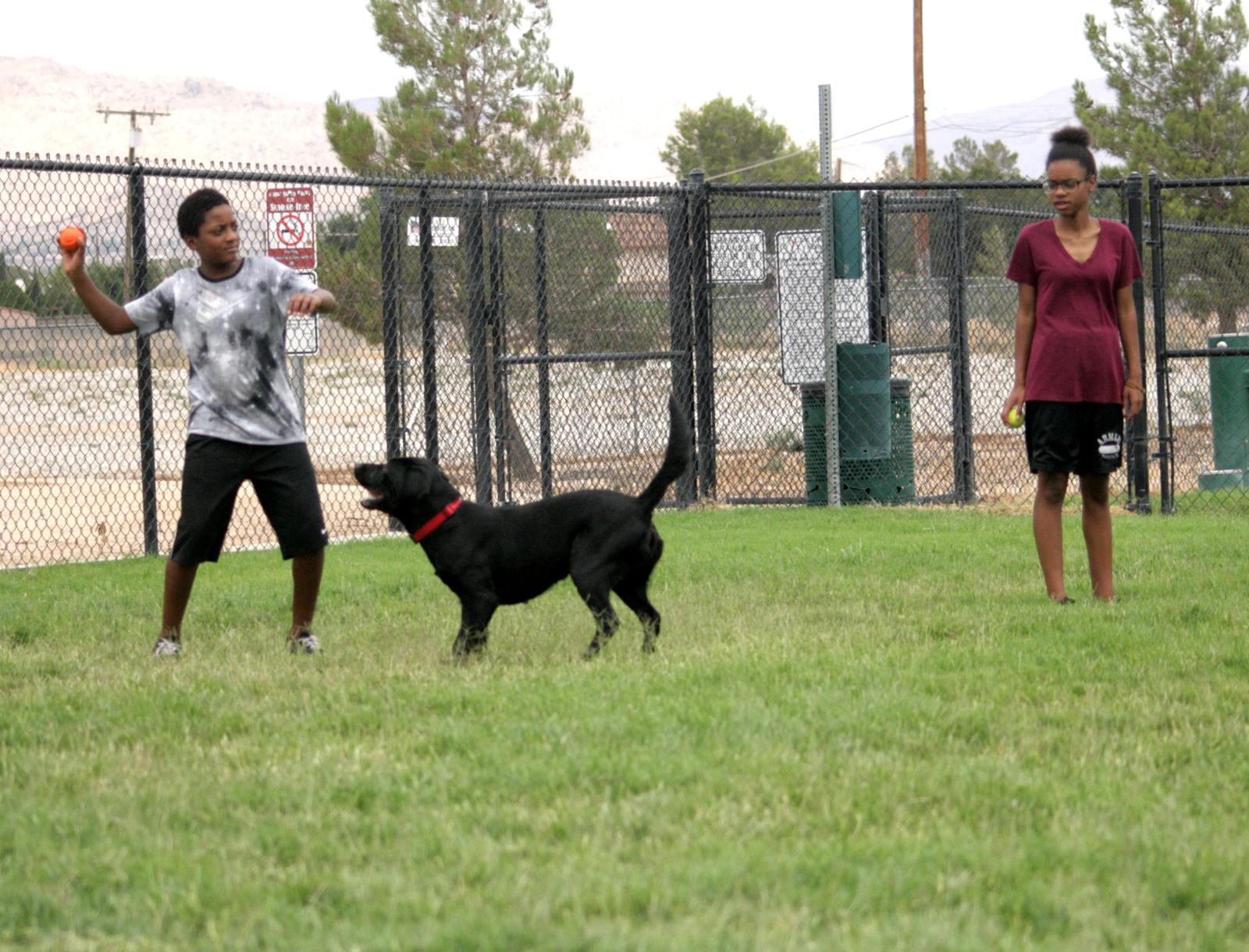 Jolly Family at Dog Park