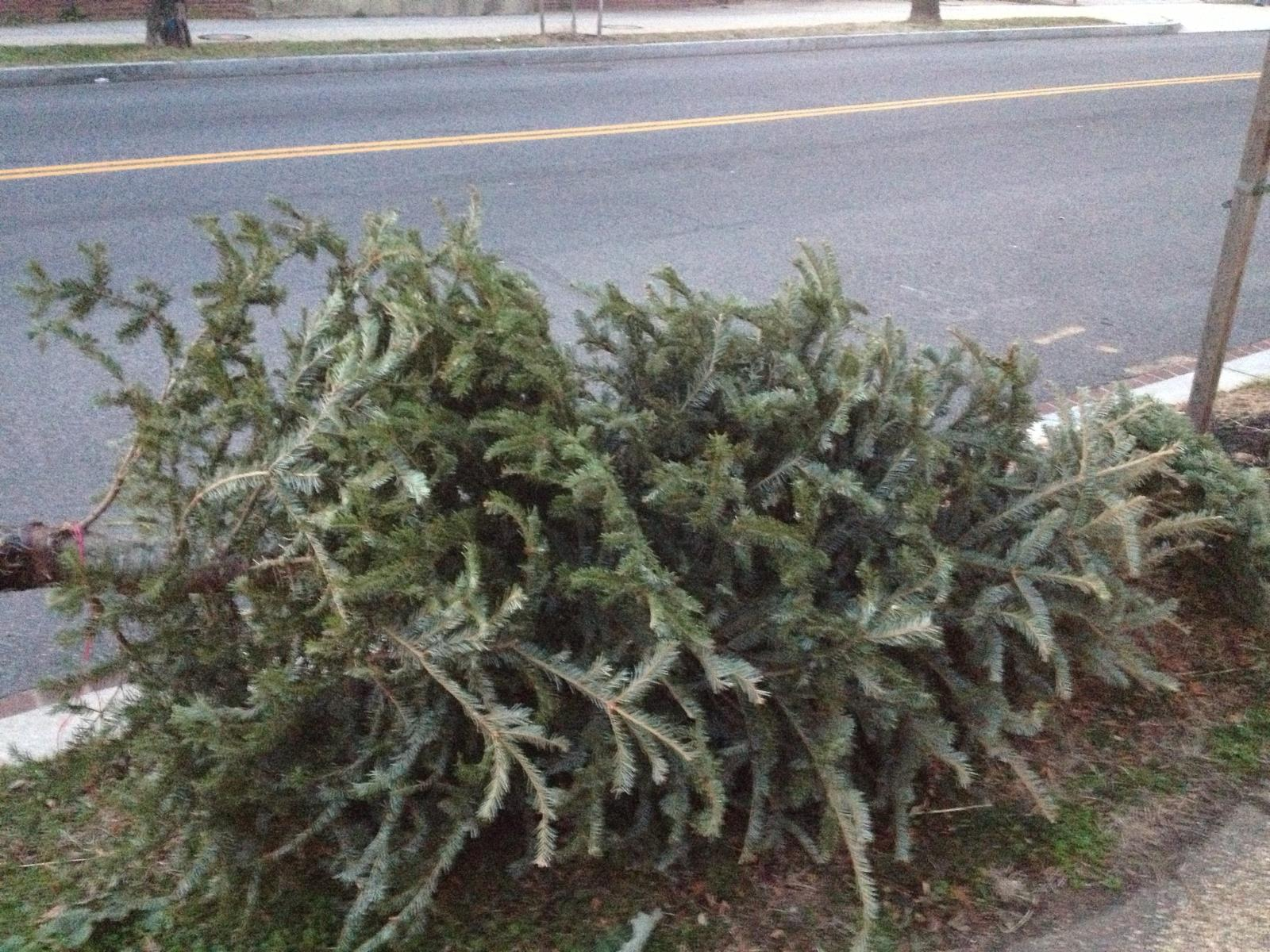 Christmas Tree on Curb